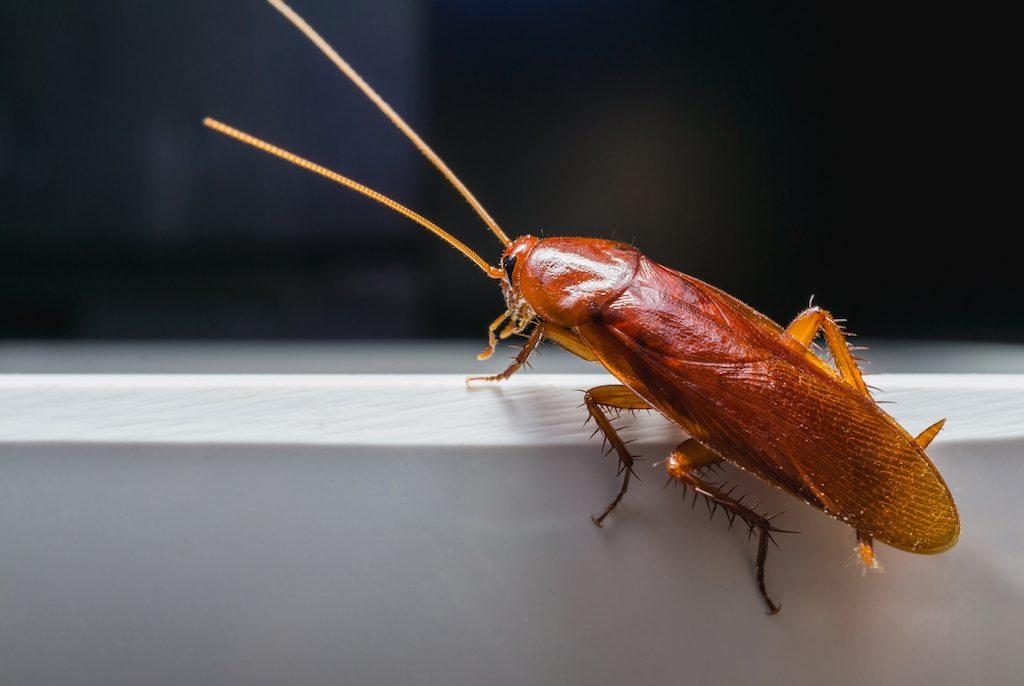 這うゴキブリ